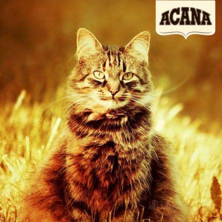 Acana Cat and logo