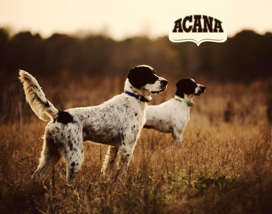 Acana Light And Fit Acana Dog Food available online at Dog Solutions