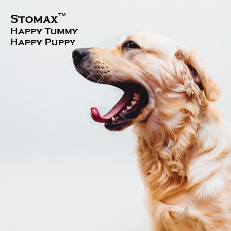 Happy-Tummy-Happy-Puppy-Stomax-TM-Dog-Solutions-Medicine-Natural-South-Africa