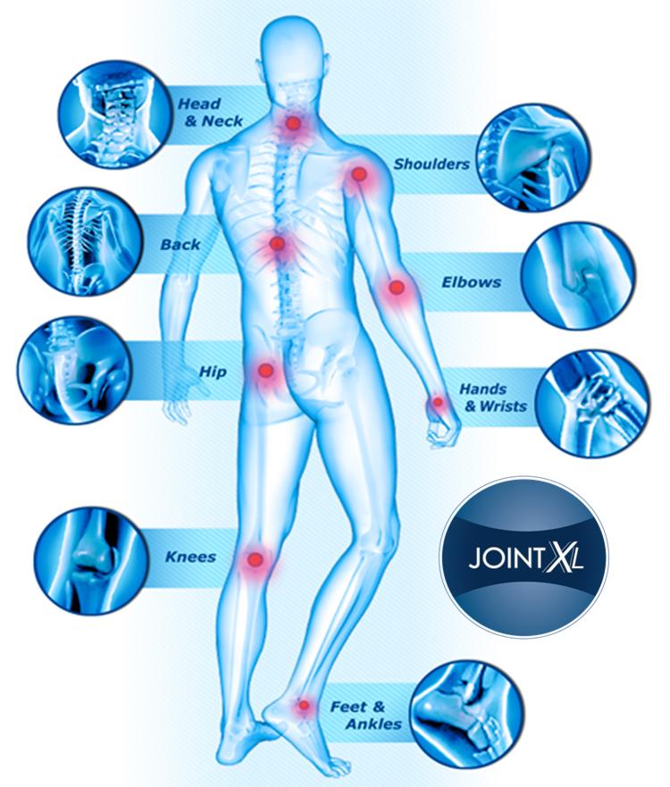 Joint XL Human