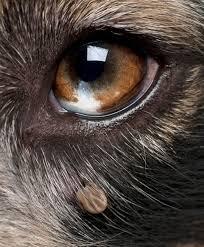 Tick by eye