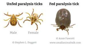 Paralysis Ticks