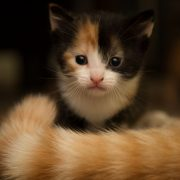 kitten and cat tail