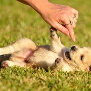 puppy-in-grass